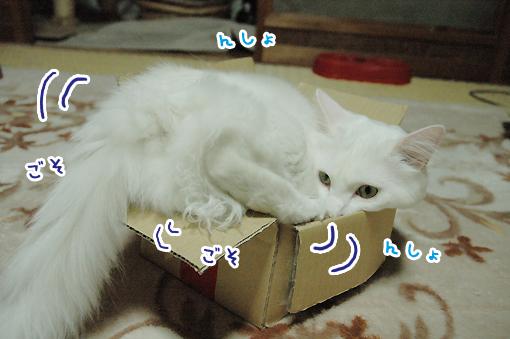 07_20090614225152.jpg