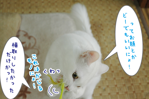 07_20090615233101.jpg