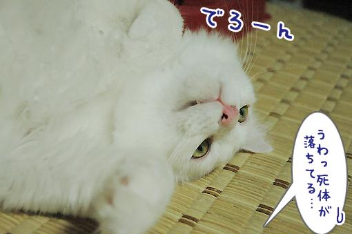 07_20090626181917.jpg