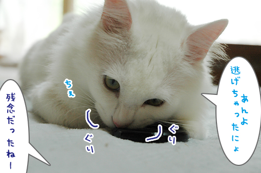 07_20090704180424.jpg