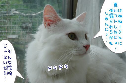 07_20090706232533.jpg