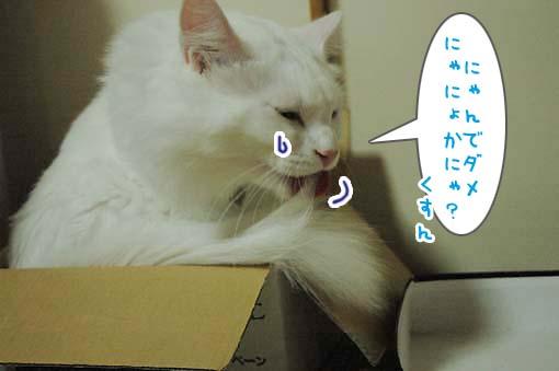 07_20090720221454.jpg