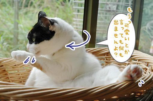 07_20090803213939.jpg