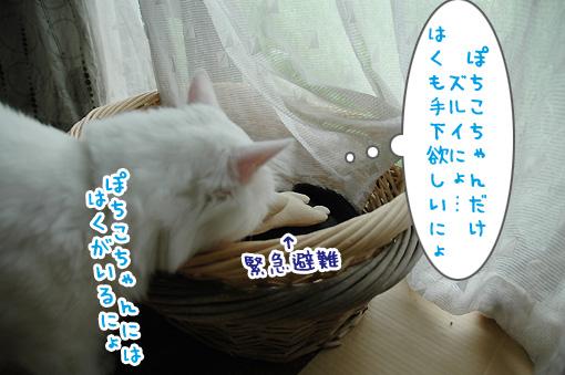 07_20090804223458.jpg