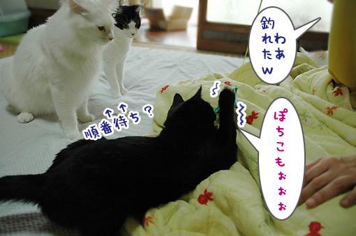 07_20090811194416.jpg