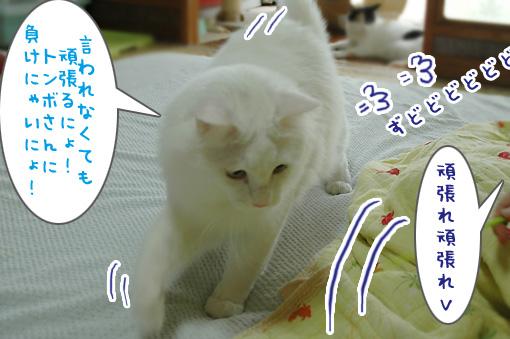 07_20090812150153.jpg