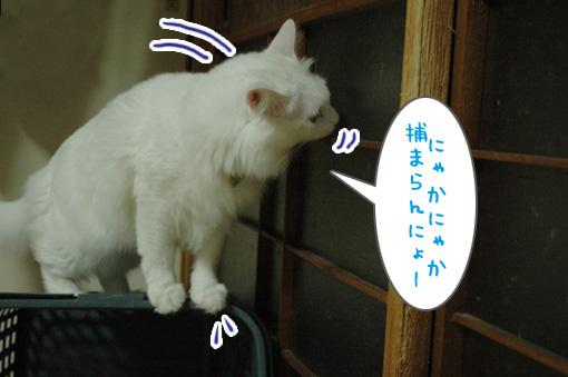 07_20090821015211.jpg