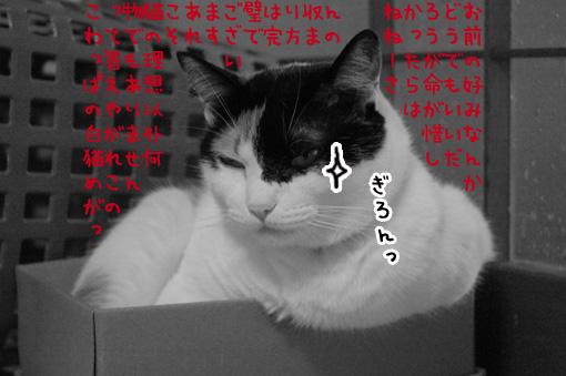 07_20090825012507.jpg