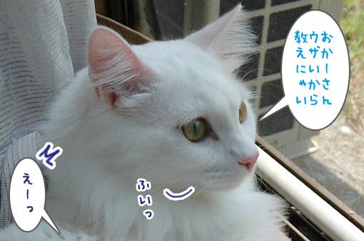 07_20090828231203.jpg