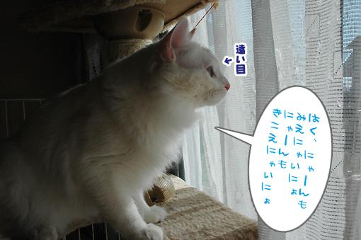 08_20090209012158.jpg