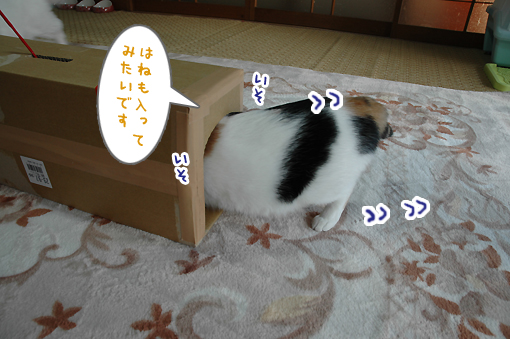 08_20090222232541.jpg