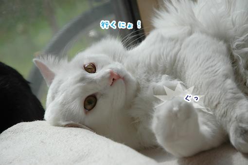 08_20090312013401.jpg