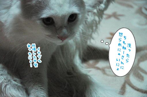 08_20090314012938.jpg