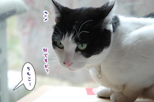 08_20090315232938.jpg