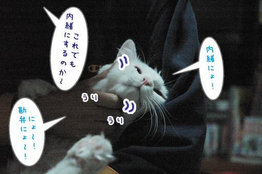 08_20090415001319.jpg