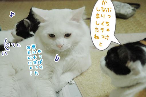 08_20090507232213.jpg