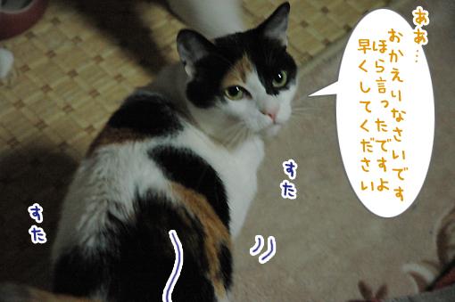 08_20090519214435.jpg
