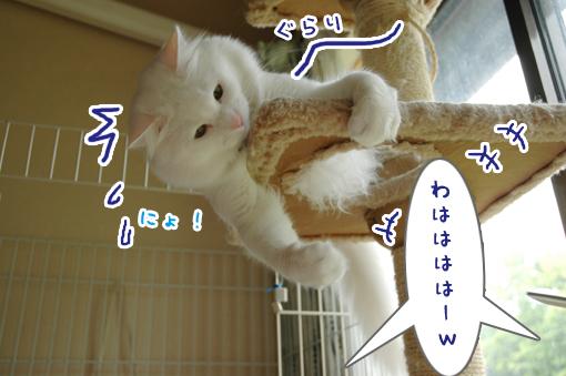 08_20090529010347.jpg