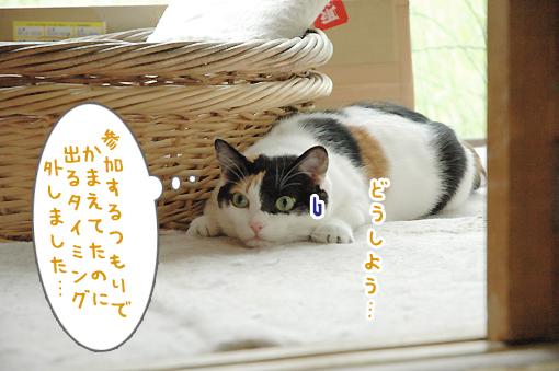 08_20090529155943.jpg
