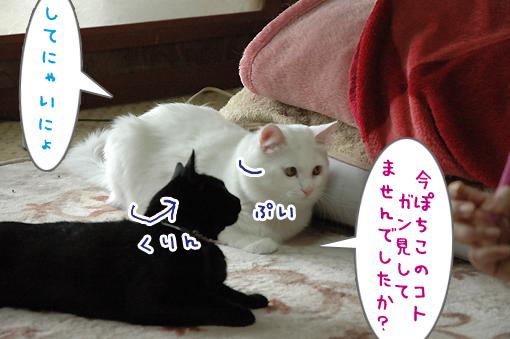 08_20090607011254.jpg