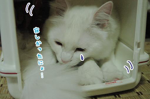 08_20090608002751.jpg