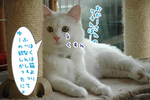 08_20090611232310.jpg