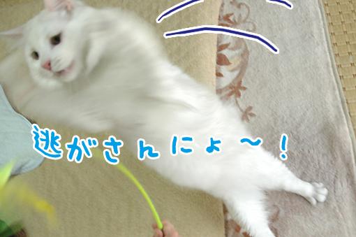 08_20090615233101.jpg