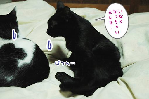 09_20090126004310.jpg