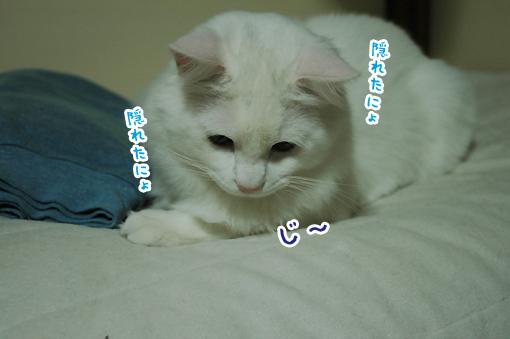 09_20090213002906.jpg