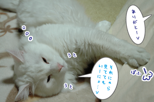 09_20090213212006.jpg