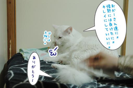 09_20090224232103.jpg