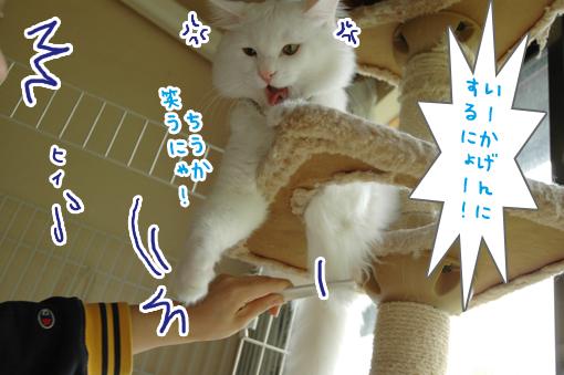 09_20090529010346.jpg