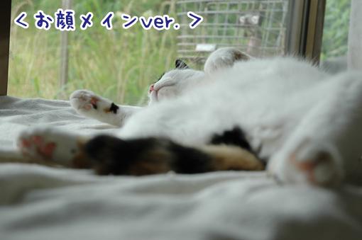 09_20090621213533.jpg