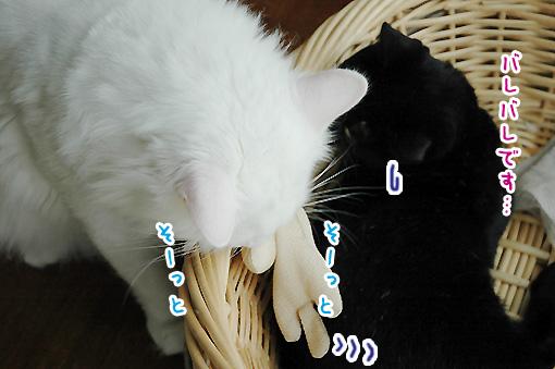 09_20090804223458.jpg