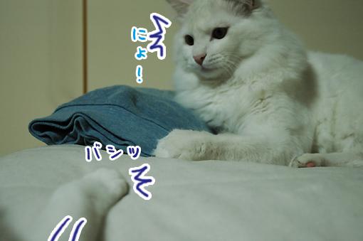 10_20090213002921.jpg