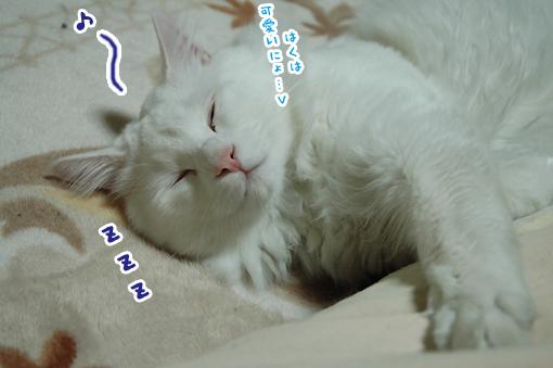 10_20090213211955.jpg