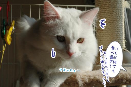 10_20090217231339.jpg