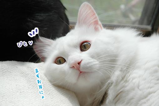 10_20090312013341.jpg