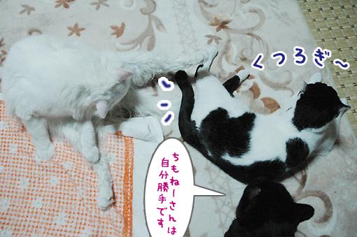 10_20090314012916.jpg