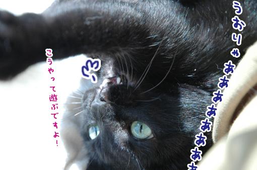 10_20090324003313.jpg