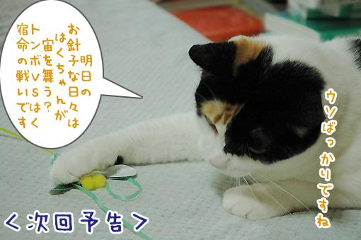 10_20090811194416.jpg