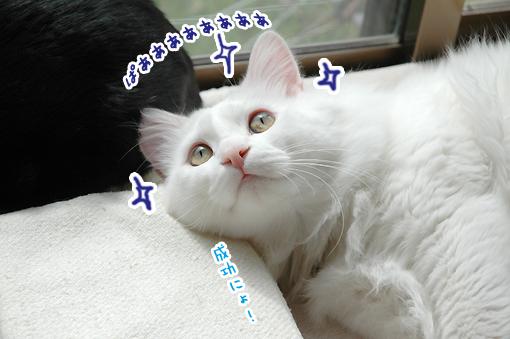 11_20090312013330.jpg