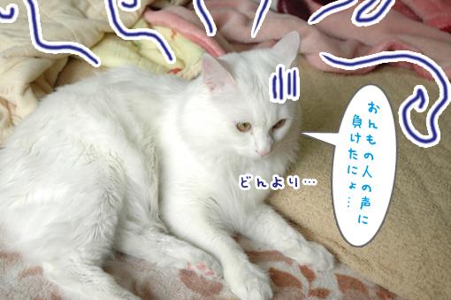11_20090427002448.jpg