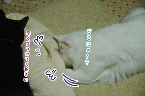 11_20090511231741.jpg