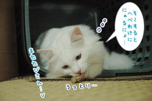 11_20090727232615.jpg