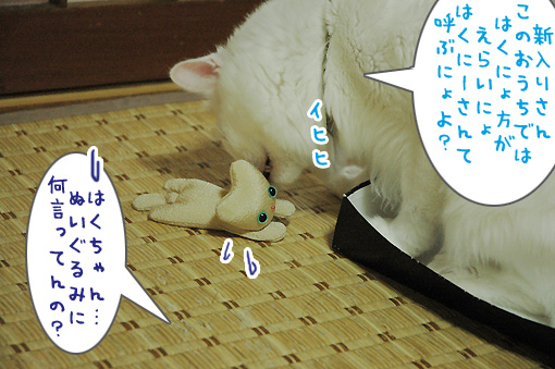 11_20090804223424.jpg
