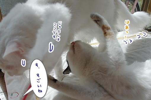12_20090220001016.jpg