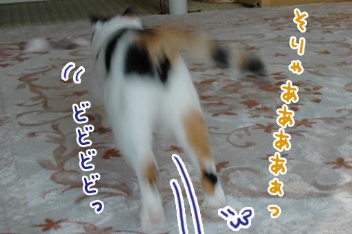 12_20090227172200.jpg