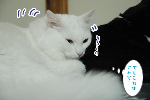 12_20090301202849.jpg