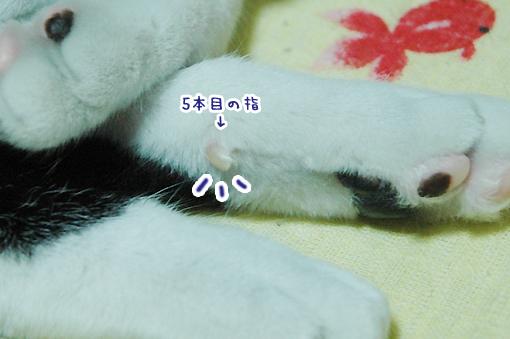 12_20090305233115.jpg